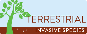 Terrestrial Invasive Species