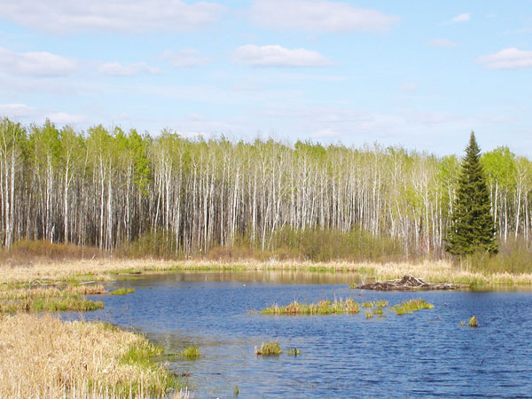 MN Forests for the Future / Upper Mississippi Project