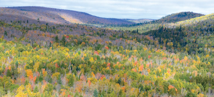 Ariel view of a forest in Fall