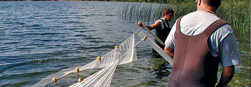 catching fish in a net