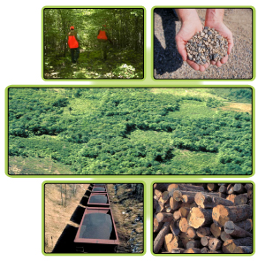 composite image showing activities on School Trust lands
