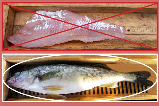 Fish as a fillet and fish with head, tail, fins, and skin intact.