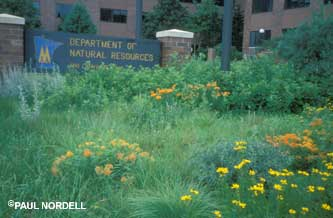 Picture of a native plants in front of DNR.