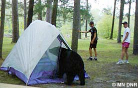Bear in tent.