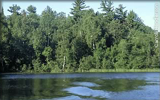 view of shore from lake