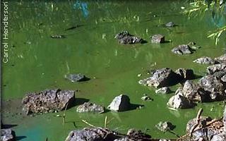 lake with heavy algal bloom