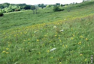 dry prairie on sloping hillside