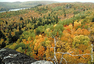vista of mixed trees from rocky overlook