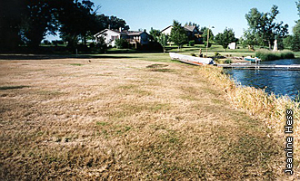site with lawn killed by herbicide