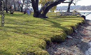 eroded shoreline and lawn