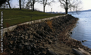 shoreline with deteriorating retaining wall