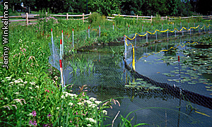 fencing in lake to keep out nuisance species