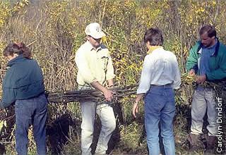workers installing wattles