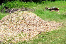 photo: Pile of wood mulch