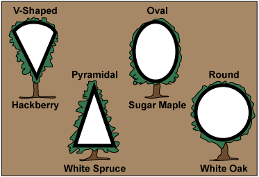 image: Drawing of tree shapes