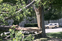 photo: Storm damage to tree because of high winds
