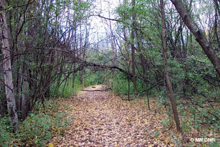 Saga Hill Natural Area Description: