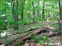 Photo of upland deciduous forest, hardwood.