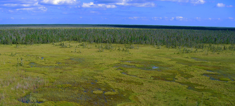 Aerial shot of Red Lake Peatland SNA