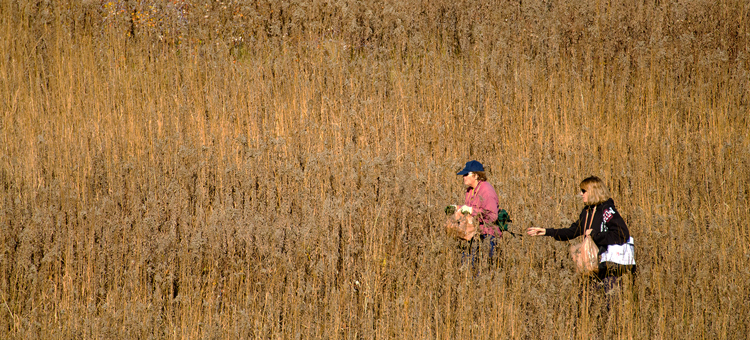 Photographer focusing camera on prairie grasses, Visit the Wild Places