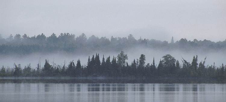 Fog over Lost Lake Peatland SNA, Visit the Wild Places