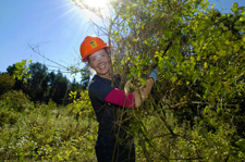 Volunteer removing buckthorn at Grey Cloud Dunes SNA