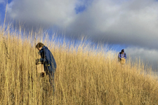 Volunteers collecting prairie seed on Lost Valley Prairie SNA
