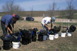 Stewards preparing tree seedlings for planting during a Volunteer Project