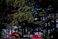 Photograph of camping in a State Forest