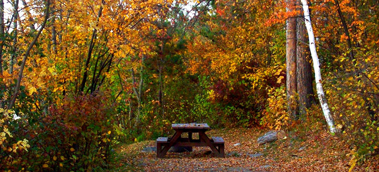campsite in Burtside State Forest in the fall.