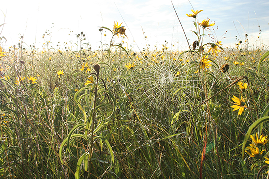 Native prairie flowers photo.