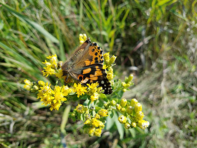 Butterfly at Blue Mounds State Park