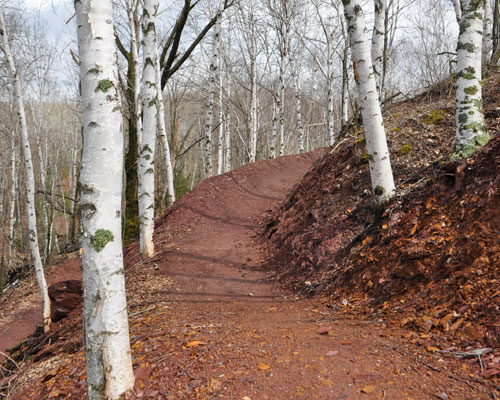 Photo of a brand new Cuyuna Lakes Mountain biking trail going through white birch trees.