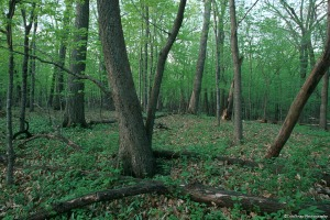 Photo within a forest found at Townsend Woods Scientific and Natural Area.