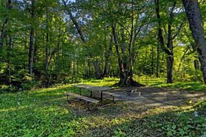 Photo of canoe-in campsite that offers campers a picnic table, fire ring, and grassy tent area that can accommodate up to two tents.
