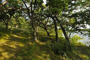 Photo of the Bonanza Trail winding through trees along the lakeshore.