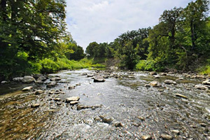 Photo of wooded shoreline along the Buffalo River.