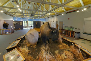 Photo of the interpretive displays and dioramas inside the Minnesota State University Moorhead Regional Science Center.