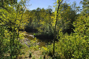 Photo of overlooks along Pike Creek, named after explorer Zebulon Pike.