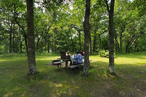 Photo of visitors dining at shaded picnic tables located in the picnic area.