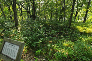 Photo of the wooded site of the home of William Whipple Warren.