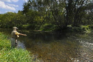 Photo of a trout fisherman trying his luck on the South Branch Root River.