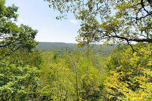 Photo of one of the park's scenic overlooks, featuring a wooded valley.