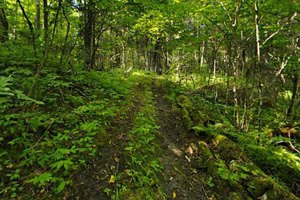 Photo of a wooded portion of the park's trail system.