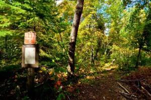 Photo of rugged Yellow Birch Trail.