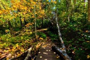 Photo of autumn colors along the Misquah Trail.