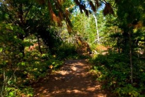 Photo of rustic Manitou River Trail.