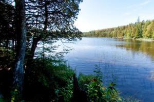 Photo of Benson Lake, eastern shoreline.
