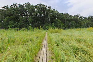 Photo of the unique wooden plank walk crossing over the wetland area.