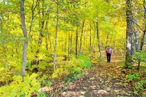 Photo of a lone hiker on the leaf-covered trail to the East Overlook.